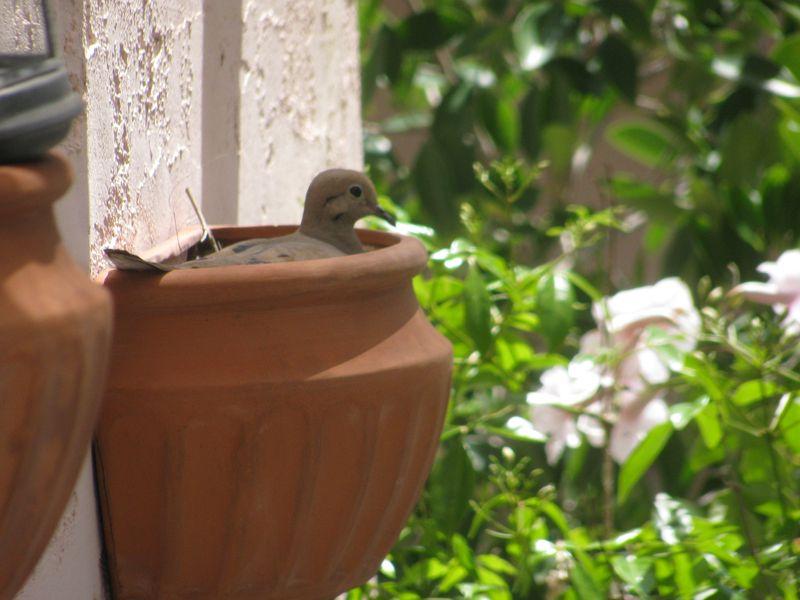 2011 5 May bird 002