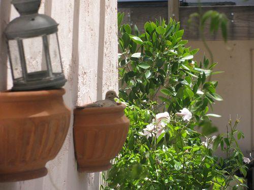 2011 5 May bird 020